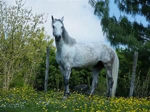 Combien De Chevaux : combien de chevaux avezvous 4 forum cheval ~ Medecine-chirurgie-esthetiques.com Avis de Voitures