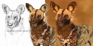 African Wild Dog Mix
