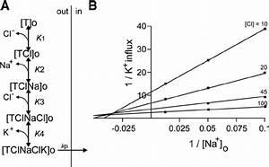 Rapid Equilibrium Model Of Na