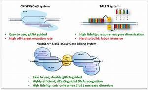 Cas-clover Nucleases