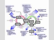 Understanding the Role of Methylation in Human Health
