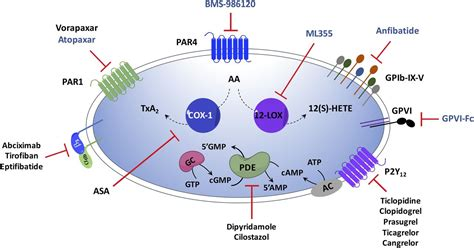 platelet signaling  disease targeted therapy