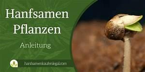 Was Brauchen Pflanzen Zum Wachsen : cannabis growguide zum hanfsamen pflanzen ~ Frokenaadalensverden.com Haus und Dekorationen