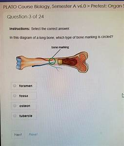 In The Diagram Where Is The Osteon
