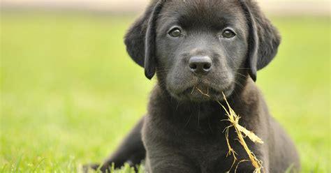 Hund Hat Pilz Im Garten Gefressen by Hornsp 228 Ne Giftig F 252 R Hunde Mein Sch 246 Ner Garten