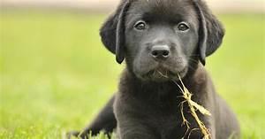 Schneckenkorn Giftig Für Hunde : hornsp ne giftig f r hunde mein sch ner garten ~ Lizthompson.info Haus und Dekorationen