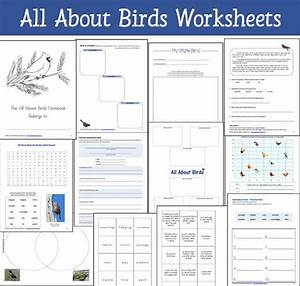 Birds Worksheet Packet For 1st