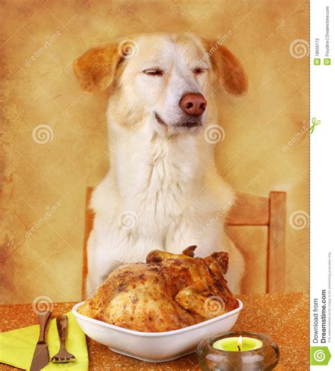 Dog Likes Frieden Stock P Ography Image