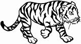 Tiger Coloring Pages Animals Cub sketch template