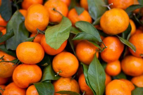Më Shumë Mandarina Kundër Thinjave - Arsyet Përse Duhet t'i Hani Çdo Ditë - AgroWeb