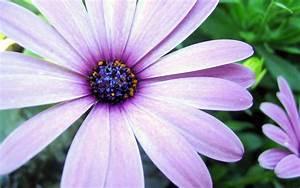 Flower Homes: Asters Flowers