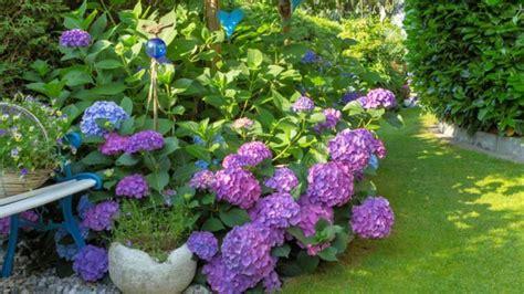 Pflanzen Für Schattigen Garten by Pflanzen F 252 R Schattige Pl 228 Tze In Ihrem Garten