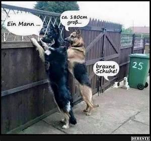 Hundezubehör Auf Rechnung Bestellen : monitoring lustige bilder spr che witze echt lustig hahaha pinterest lustige bilder ~ Themetempest.com Abrechnung