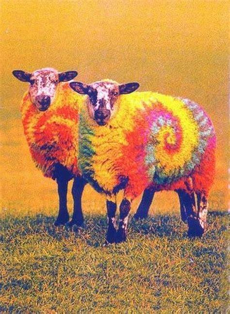 colored sheep sheep images colored sheep b