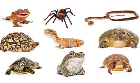 animales exoticos del grupo reptiles anfibios