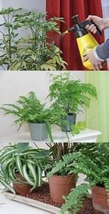Arbuste D Intérieur : les 25 meilleures id es de la cat gorie plante d 39 int rieur ~ Premium-room.com Idées de Décoration