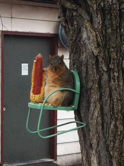 photogenic squirrels  arent represented