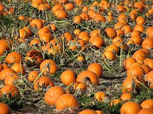 Fall Pumpkins Background images