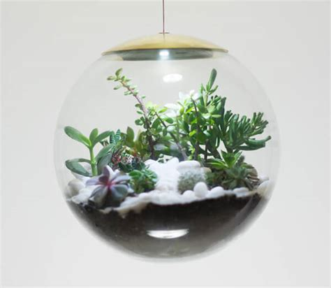 magical tale terrarium ls you absolutely need in