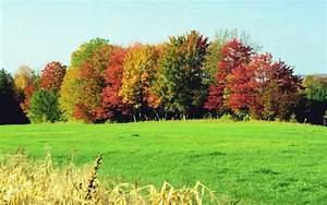 Kostenlose Bilder Herbst : herbstbilder kostenlos ~ Yasmunasinghe.com Haus und Dekorationen