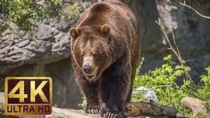 4k Ultra Hd Video Of Wild Animals