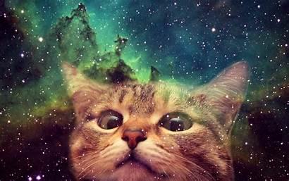 Cat Weird Desktop Screen Phone Wide