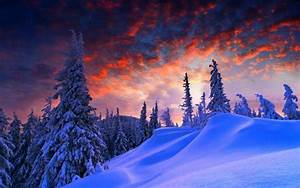 Snow, Landscape, Trees, Wallpapers, Hd, Desktop, And, Mobile