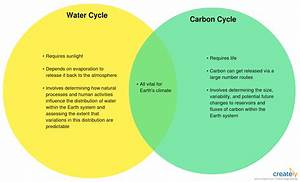 Water Vs Carbon Cycle