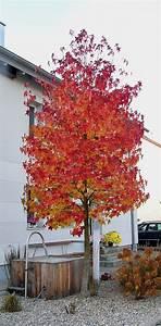 Amberbaum Oktoberglut Preis : die besten 17 ideen zu gr ser auf pinterest outdoor ~ Michelbontemps.com Haus und Dekorationen