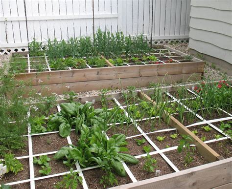 small garden ideas square foot veggie gardening eco