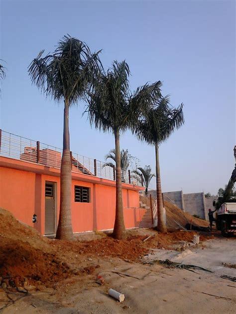 Foto: Palmeira Imperial de Florência Serviços ...