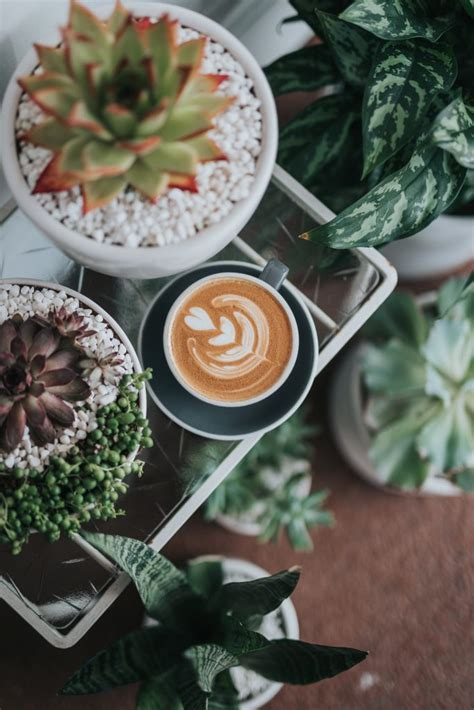 Best cafés in albuquerque, new mexico: Coffee Culture for ABQ Brides - Wedding Collective New ...