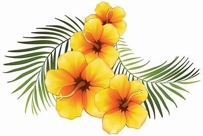 Flower Tropical Flowers Clipart Floral Transparent Exotic