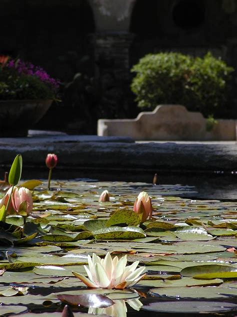 lotus garden thai 66 photos free stock photo in high resolution lotus flower flowers