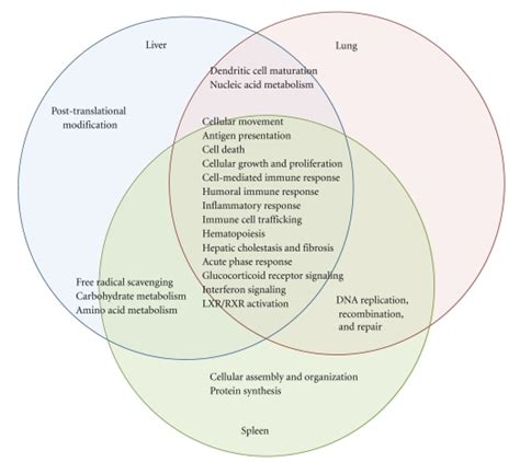 Transcription And Translation Venn Diagram by Venn Diagram Showing The Overlap Of Major Functions Of