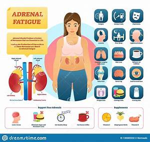 Adrenal Glands Cartoons  Illustrations  U0026 Vector Stock