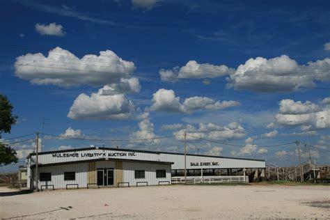Muleshoe Livestock Auction