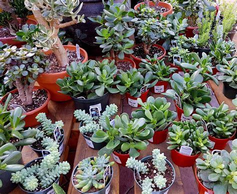Plantes Grasses (succulentes)  Jardin Dion