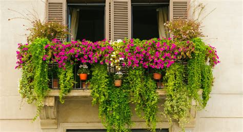 great garden plants these are just the plants you need to start a balcony garden
