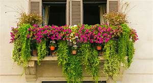 These, Are, Just, The, Plants, You, Need, To, Start, A, Balcony, Garden