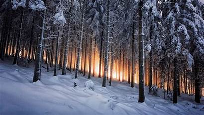 Winter Dark Forest Desktop Background Foh Wallpapers