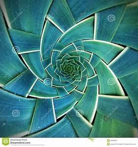 Radial Pattern In Nature | www.pixshark.com - Images ...