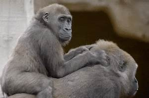 Baby Lol GIF by San Diego Zoo - Find & Share on GIPHY