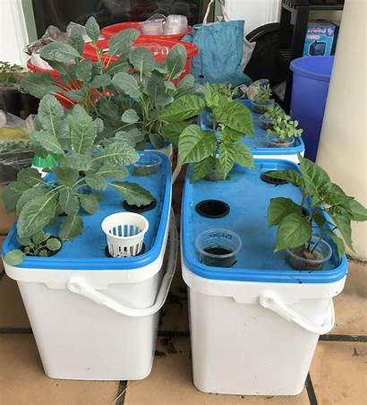 Hydroponic Hydroponics Systems Simple Examples Fish Air