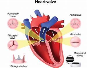Diagram Of A Heart Valve