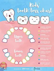 A Timeline For Your Child U2019s Tooth Loss  U2013 Sheknows