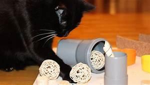 Katzenspielzeug Selber Machen Karton : katzenspielzeug selber machen intelligenzspiel f r katzen ~ Frokenaadalensverden.com Haus und Dekorationen