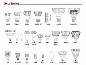Bulbs Identification Guide