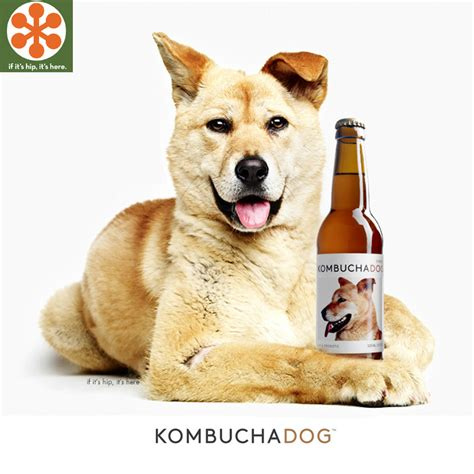 If Its Hip Its Here Archives A Holistic Beverage Helps Homeless  Ee  Dogs Ee    Ee  Find Ee   A Home Kombucha  Ee  Dog Ee