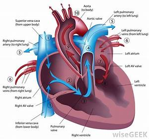What Is The Ejection Fraction For Heart Failure